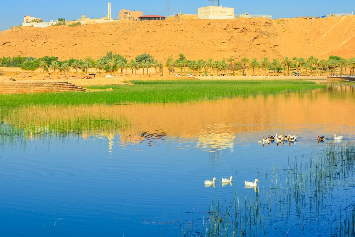 "Top 5 ""Free of Charge"" Tourist Attractions for Nature Nature Lovers in Riyadh"
